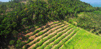 Habitat destruction Rain forest destruction in thailand form Aerial view