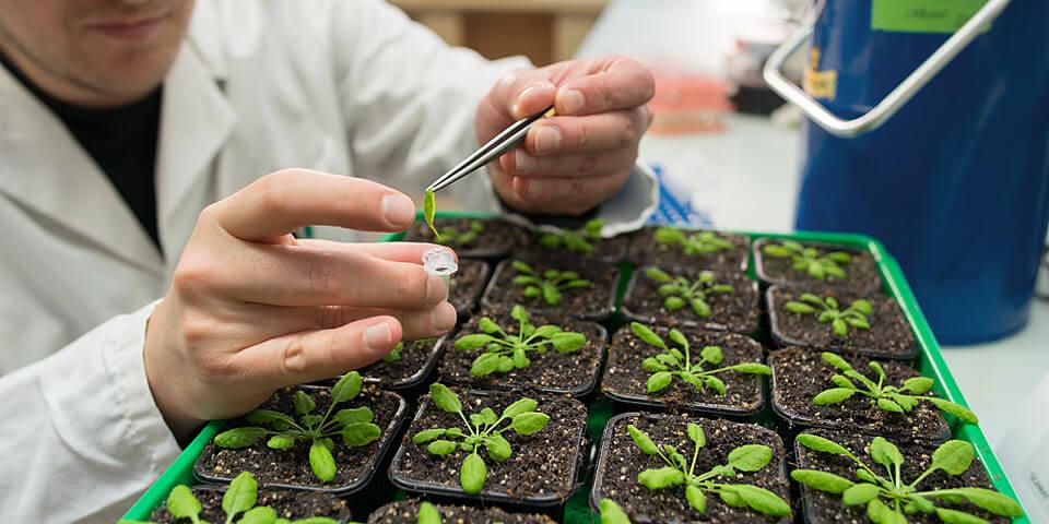 plant scientist 37247