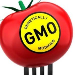 GMO food cancer 327237