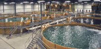 SIS Aquaculture