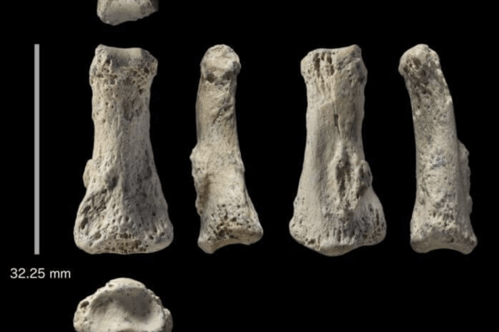human africa fossil 34727