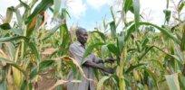 UNDPUganda SLM David Muhoozi Lyantode farmer