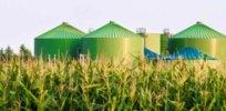 biomass bioeconomy biotech 372327