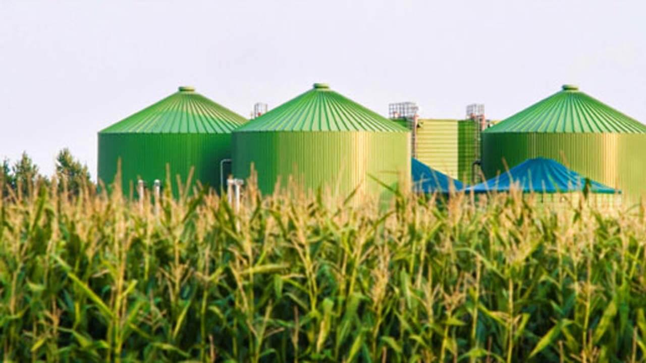 banner biomass