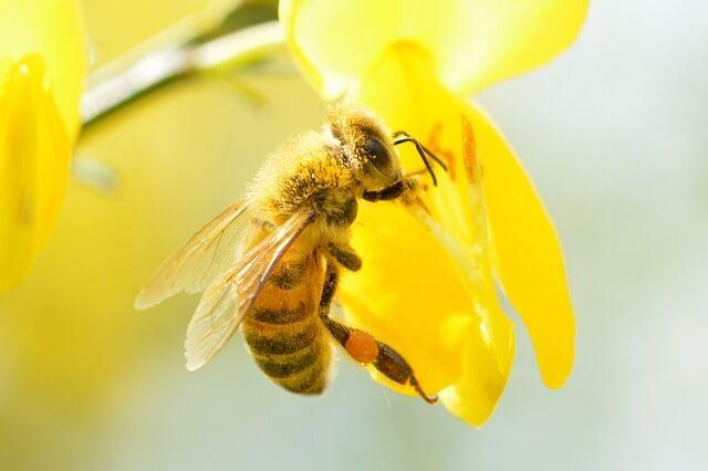 neonicotinoid thiacloprid bees 4327
