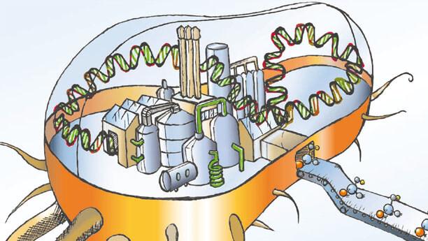 biofactory 3772238