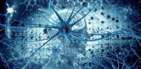 brain neuron