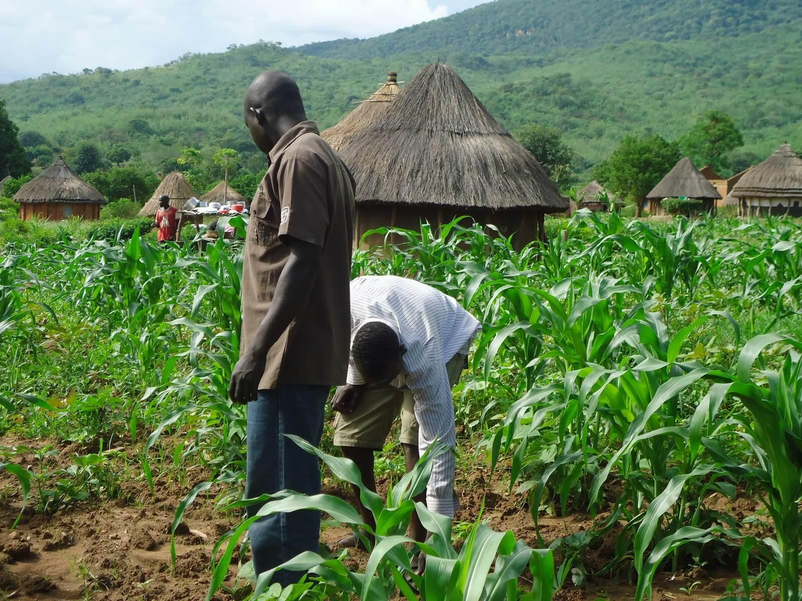 Nigeria agriculture 43727