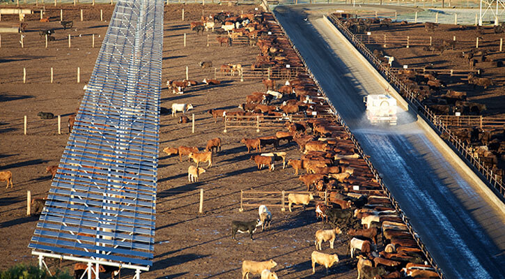 Managed well, cattle feedlots can be the environmental and ethical smart choice