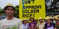 greenpeace activity do not approve golden rice x x