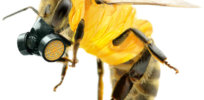 Viewpoint: Friends of the Earth ignores organic pesticides harmful to bees