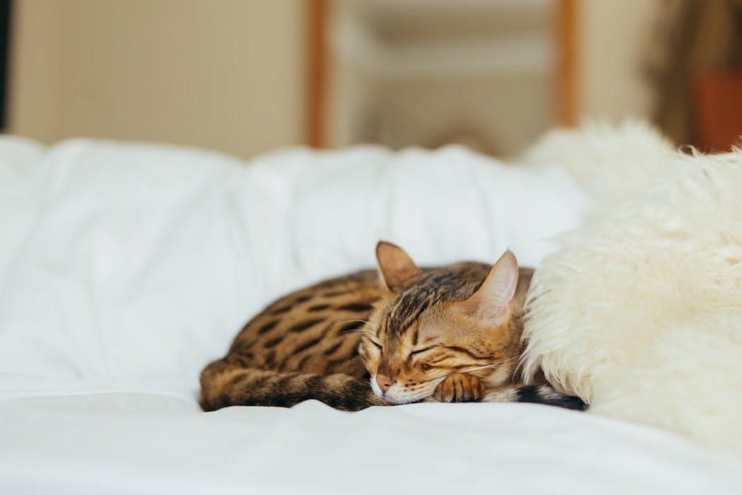 kitty 4 26 18