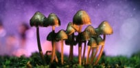 mushrooms 4 3 18