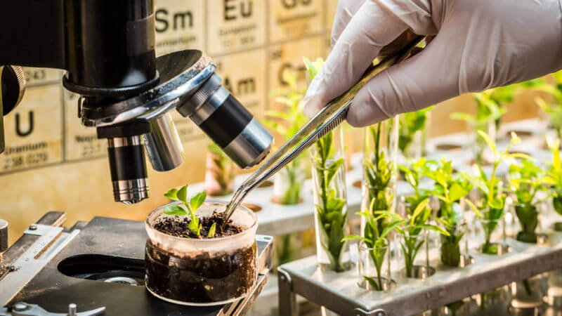 European farmers push EU to emulate USDA in not regulating CRISPR and other new crop breeding techniques