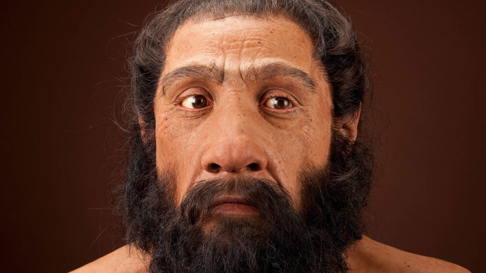 neanderthal 4 2 18