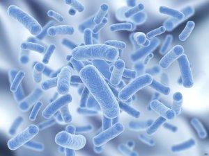 probiotics 4 26 18
