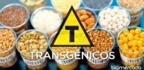 transgenicos o que sao biomercado brasil x