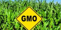 'The Big Lie' About Genetically Engineered Crops