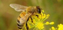 bees neonicotinoids 328382