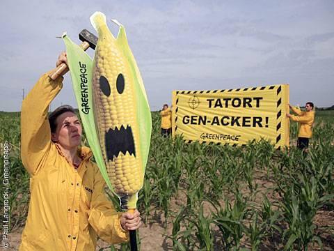 greenpeace GMO 327327