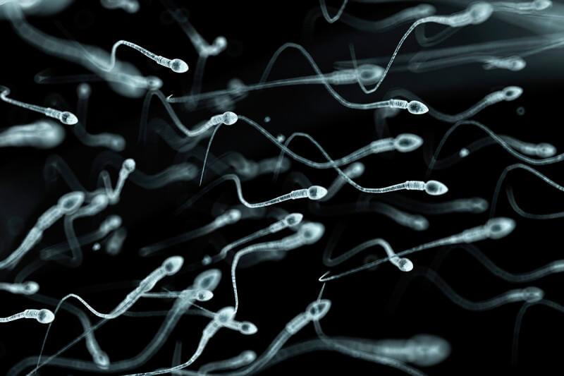 human sperm artwork spl x