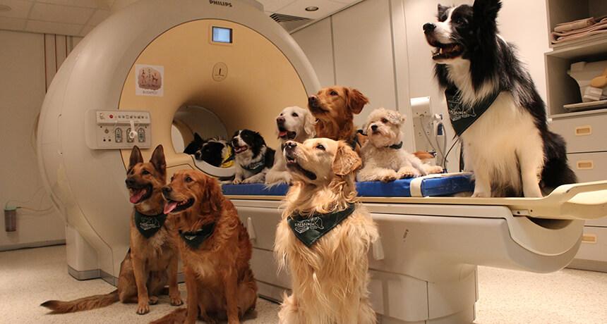 5-21-2018 083016_lh_dog-brain-main-new_free