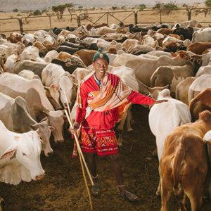 livestock to markets x