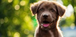 puppysmile