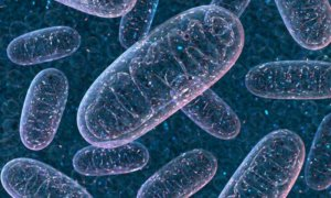 5-31-2018 2-mitochondria (1)