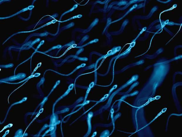 5-6-2018 sperm-1