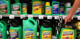 Roundup lawsuit: Bayer shares tumble as legal battle against glyphosate-cancer claims continues