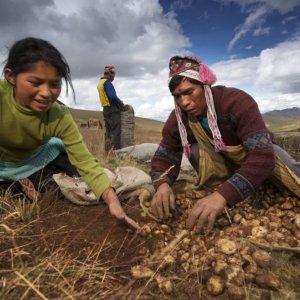 Peru farmers 3237