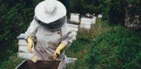 honeybee-beehive-Garden-Apiary-Beeswax-Bee-neonic-study