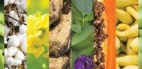 GMO food 327327