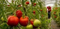 CRISPR food farming 3722788