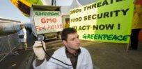 Greenpeace GMO 327237