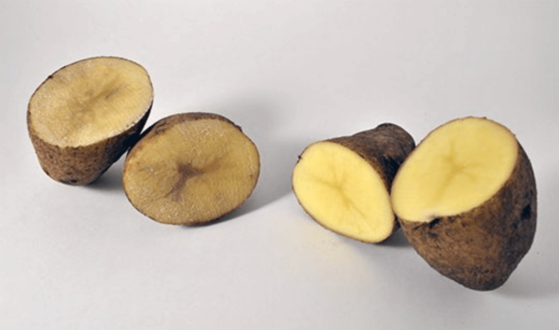 non browning potato crispr 382377