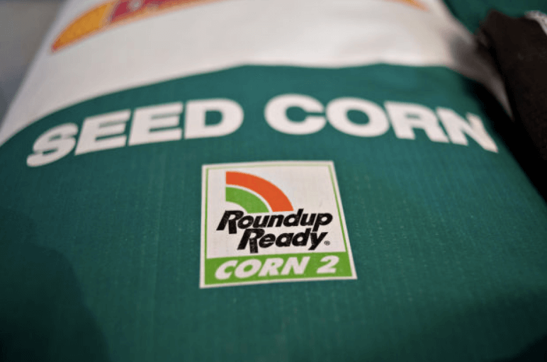 Roundup Ready GMO corn 323288