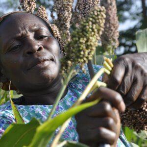 Nigeria farmer 32737