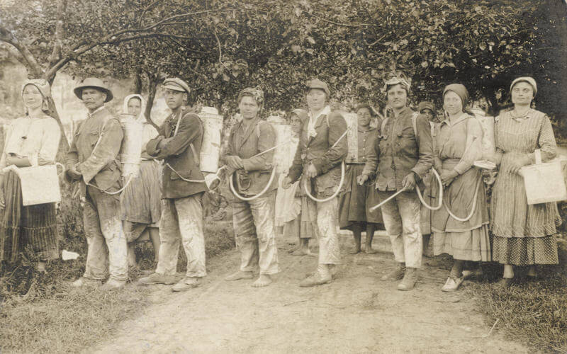 Vineyard workers