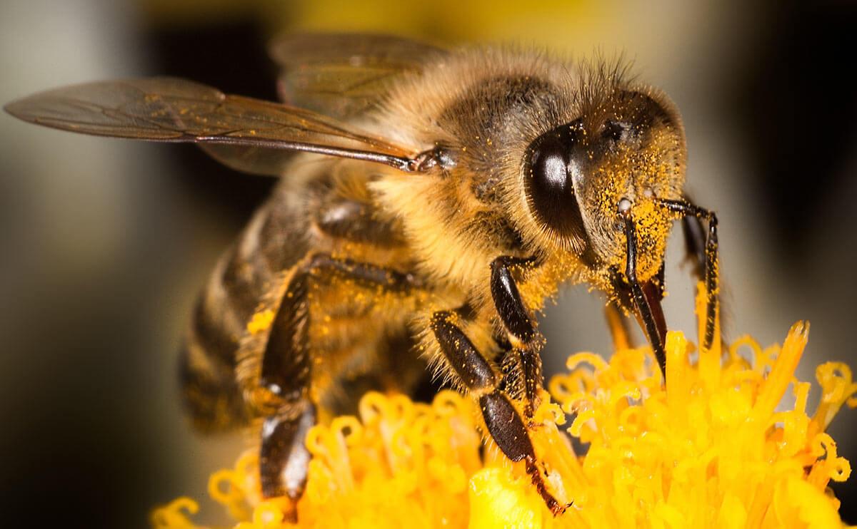 bee crisis