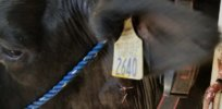 Livestock Labs EmbediVet 4348547