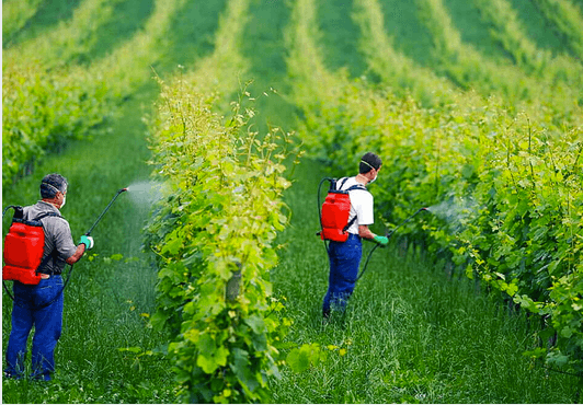 Rumored Buzz on Organic Pesticides: Not An Oxymoron