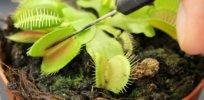 plants conscious 32837