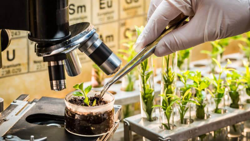 Precision plant breeding 47247