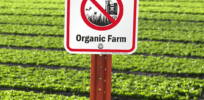 Is organic produce hazardous to your health?