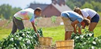 organic farming reduces fertilizer