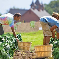 organic farm yield 3827