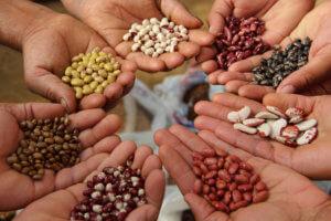 genebank seed crop diversity 327327