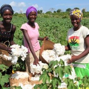 women picking cotton